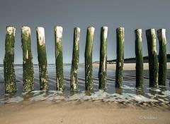 Les piquets en bois de la plage de Sangatte-4.jpg