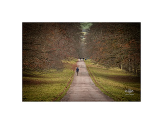 A Melancholy Walk...