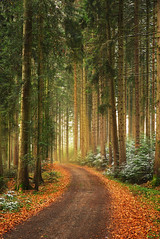 Waldweg (johaennesy) Tags: forrest woods way path autumn orange mist glow warm trees tree opensourcesoftware gimp rawtherapee pentaxian