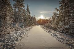 20171119003982 (koppomcolors) Tags: koppomcolors forest skog vinter winter värmland varmland sweden sverige scandinavia snö snow