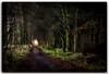Will you walk with me... (tiggerpics2010) Tags: pathway woodland romantic romance tempting temptation scotland outdoor