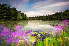 Memories of Monet (Matt Molloy) Tags: mattmolloy timelapse photography timestack photostack movement motion pond water reflections waterlilies purple flowers green grass trees clouds trails wind burnthills ontario canada landscape nature countryside lovelife