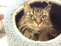 Ryleigh - 12 year old spayed female