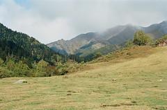 Alto Pirineo (davidgarciadorado) Tags: altopirineo mountain prairy lleida catalonia spain ektar olympusom2n zuikoom trees clouds ithinkthisisart