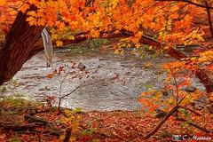 171011-19 Rivière St-Charles (clamato39) Tags: parcchauveau rivièrestcharles river rivière autumn automne eau water provincedequébec québec canada nature