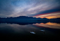 (Andreas.W.) Tags: gmunden traunsee lakeview eveningmood alps alpen salzkammergut 12mm wideangle weitwinkel xt10 swans swan xt1