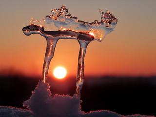 Little Ice Dragon