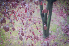 La giostra (bresciano.carla) Tags: helios442 helios pentax pentaxk500 pentaxart autumn tree flickr leaf colors foglie red rosso leaves bokeh