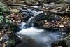 El puentecito (candi...) Tags: río riera agua rocas piedras tronco montseny corriente hojas hojassecas sonya77 naturaleza nature airelibre