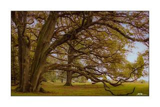 Baum am Totengrund
