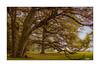 Baum am Totengrund (mmsig) Tags: lünebugerheide heideblüte sonne himmel wolken canoneos60d grün green niedersachsen landschaft baum monument gedenkstätte tree forrest wald