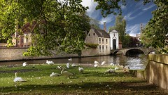 Bruges - 4056 (YᗩSᗰIᘉᗴ HᗴᘉS +9 500 000 thx❀) Tags: fauna 7dwf sky belgium bruges flandres flanders aa europa water river waterscape landscape cygne bird oiseau city hensyasmine yasminehens