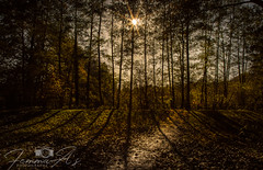 The light within us, keep seeking it (femmaryann) Tags: light mystical shadows trees sunlight autumn seeker beauty outdoors forest path nature natural park shade autumnal pathway direction mysticism elmdonpark