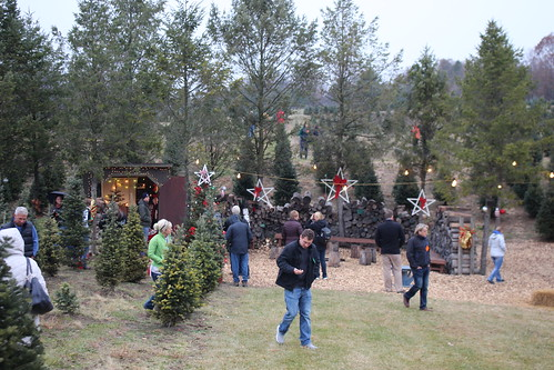 Lenderink Tree Farm