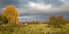 Hob Moor, York, November 2017 - 1 (nican45) Tags: 12november2017 12112017 2017 canon hobmoor minster november powershot sx700hs yil york yorkincidentlight yorkshire clouds photography sky tree