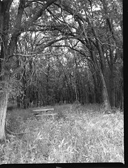 img387 (wolffriend333) Tags: mamiya6451000s kodakplusx blackandwhite rollfilm 120 mediumformat clovis newmexico
