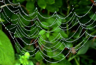 TRIM the TREE with SPIDER WEB LACE