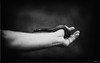 vader (Jen MacNeill) Tags: maryland zoo md baltimore zoos animal animals bw bnw blackandwhite snake eastern hognose hand arm person reptile keeper