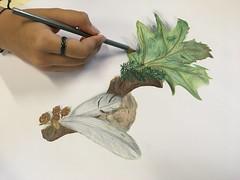 Desenho A- 10.º ano (Agrupamento de Escolas do Forte da Casa) Tags: lapisdecor artes cursodeartesvisuais desenhoa desenho desenhar