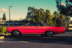 Skylark (Carrie McGann) Tags: car buick skylark convertible 1965 111717 nikon interesting