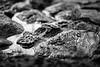 Forming New Land (belleshaw) Tags: blackandwhite oahu hawaii waikikibeach resort rocks water puddle rough texture reflections detail abstract bokeh