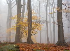 autumn (vd1966) Tags: elitegalleryaoi bestcapturesaoi aoi