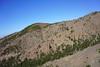 Tenerife (RS_1978) Tags: wald sonyalpha7rii spanien sony espagne españa forest forêt ilce7rm2 spain adeje canarias es