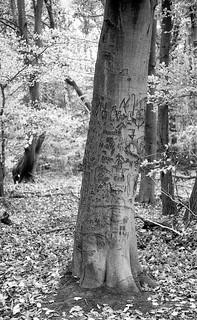 tree of broken carved dreams
