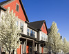 colorful townhome housefronts (Photo Dean) Tags: 2017 background blossomingtree clipart colorful daybreakutah housefront photo photography redrooftop saltlakecounty screensaver southjordan spring springtrees usa ut utah