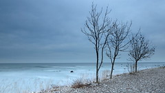 Three Trees (jurgenkubel) Tags: seascape landscape landskap landschaft strand beach kustinje kust coast tree träd baum trees bäume hav see sea blu östersjön ostsee baltic visby gotland sverige schweden sweden olympus