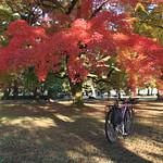 紅葉、絶好調~ thumbnail