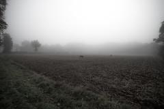 Beasts in the fog (ADNeko) Tags: bume brouillard fog landscape beast animal wild monochrome adneko d800 sigma1735 1735 nikon 1735mm