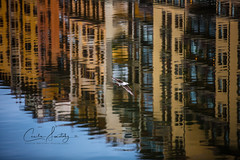 Seagull over Ponte Vecchio (CecilieSonstebyPhotography) Tags: pontevecchio building window reflection reflections city canon arno markiii river ef70200mmf28lisiiusm bird windows architecture canon5dmarkiii seagull buildings firenze florence