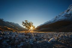 The pursuit of life (mr_Alex_Turner) Tags: sun landscape sunrise swamp gorge caucasus autumn river rays tree rocks mountains sky russia