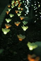 Light flower (Jiro Fukui) Tags: イルミネーション ライト 足利フラワーパーク 藤 夕日 illuminations light ashikaga flower park fuji sunset