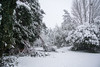 Broken branches & lots of snow on the Strawberry Tree (-ChrisPix-) Tags: chandos strawberrytree