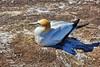 IMG_7239_qhdr (XimoPons : vistas 4.000.000 views) Tags: ximopons nuevazelanda newzealand oceania austral antipoda aves bird