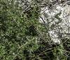 un cuc (ibzsierra) Tags: gusano cuc samsung natural ibiza eivissa balearres salinas parque