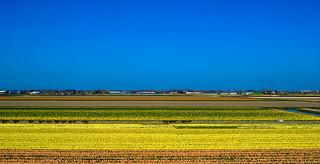 Lisse - Holland