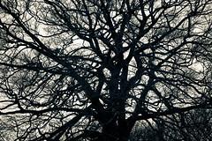 Memory Tree (340/365)