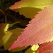 unknown leaf, showing how shadow influences color
