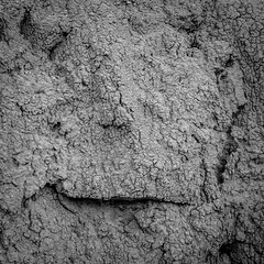 DSCF0727 (rjosef) Tags: borrego desert