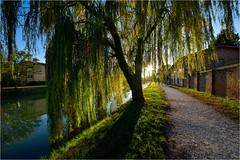 171101 villa pisani 968 (# andrea mometti | photographia) Tags: villa pisani stra colori autunno foglie rosso giallo mometti riviera brenta venezia