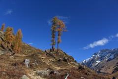 Lötschental (bulbocode909) Tags: valais suisse lötschental montagnes nature automne mélèzes arbres nuages paysages bleu jaune orange neige