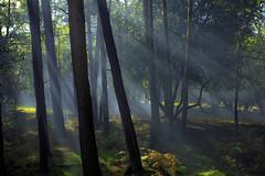 Smokin forest (Donna Hampshire) Tags: newforest trees smoke light donnarobinson donnahampshire inspiremephotographycouk hampshire landscape explore
