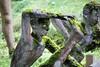 IMG_0225 (www.ilkkajukarainen.fi) Tags: suomi suomi100 eu europa scandinavia suomifinland100 prtrait potretti open museum stuff finland finlande scupture park parikkala imtra mies men man folk art outsider world life happy green vihreä ite taide teos kaakko itse tehty elämä kansantaide yoga mean alaston nake nude jooga gymnastics sammal face portrait patsas statue patina