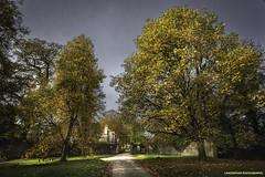 Photo of Lanhydrock, Plane Trees.