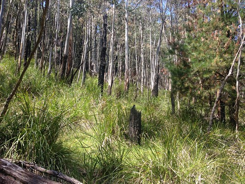 High bushland, Mount Macedon