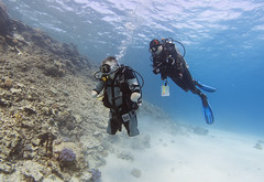 quadruple amputee man takes diving course 19 (KnyazevDA) Tags: disability disabled diver diving deptherapy undersea padi underwater owd redsea buddy handicapped aowd egypt sea wheelchair travel amputee paraplegia paraplegic