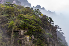 Pines On The Rocks, HuangShan (lycheng99) Tags: huangshan pines rocks rockformation fog clouds seaofclouds visibility china anhui nature landscape mountains